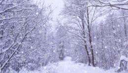 survive a blizzard